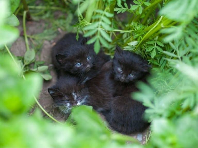 Do Feral Cats Abandon Their Kittens?