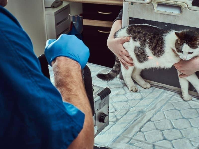 stray cat at vet