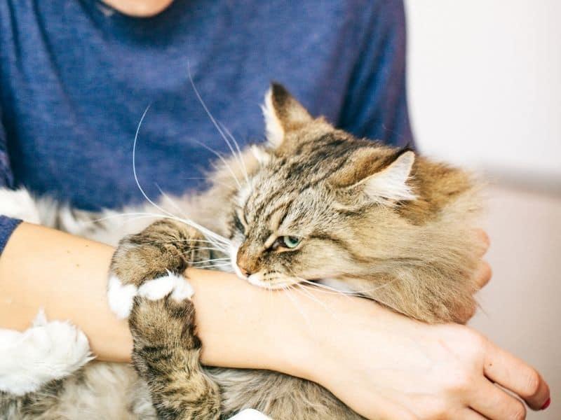 cat biting