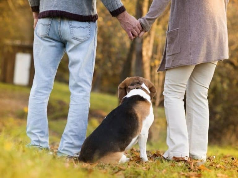 Overview of 45 Dog Breeds for Seniors: Pick Yours
