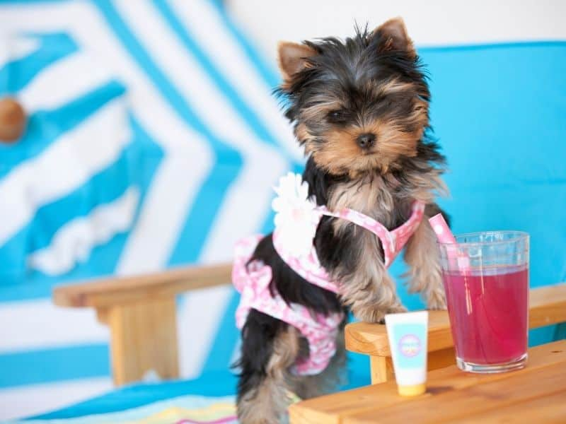 dog with soda