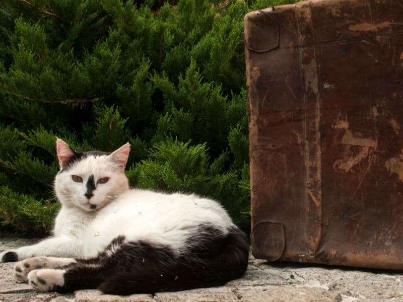 feral cat and suitcase