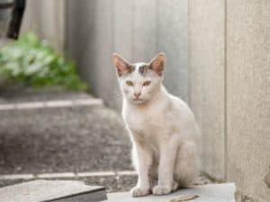 stray cat