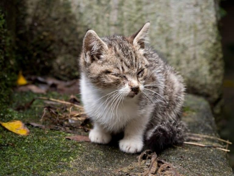 How to Tell If a Stray Kitten is Healthy: Check These 10 Signs