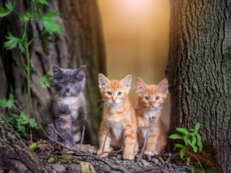 homeless kittens
