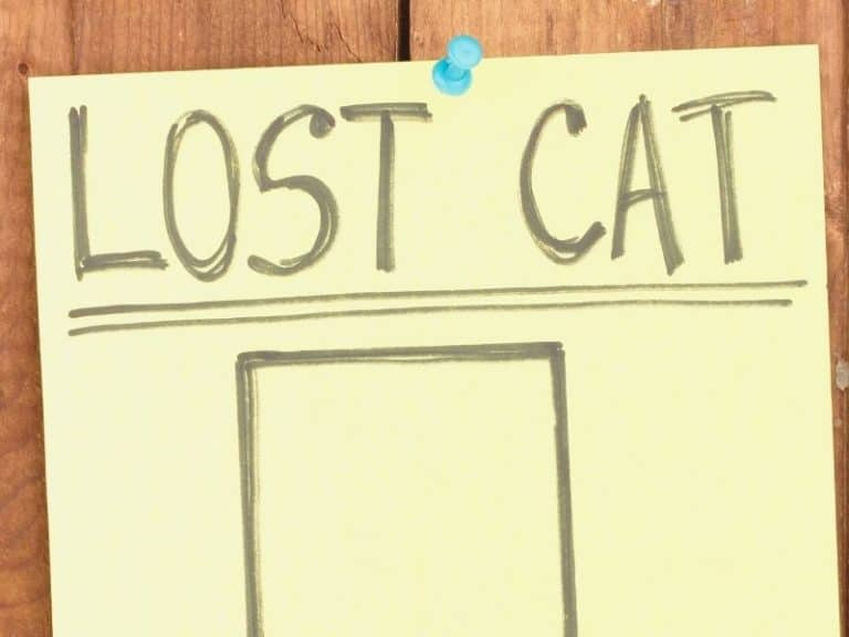Here are the Odds of Finding a Lost Cat After Two Weeks or a Year