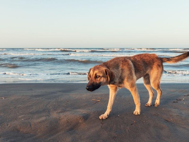stray lost dog