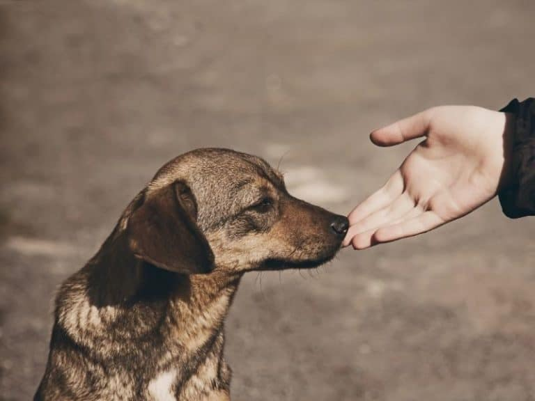 What, When and How to Feed Stray Dogs: Ultimate Guide