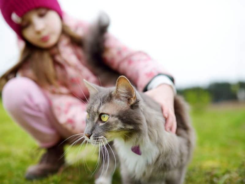 petting stray cat