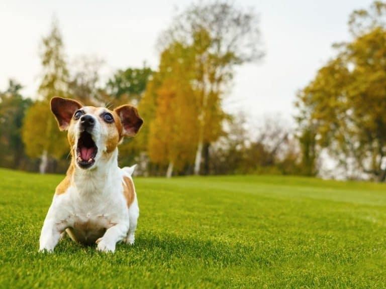 Ultimate Guide on Dog Barking