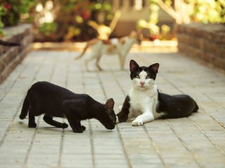Where Do Stray Cats Go During the Day?