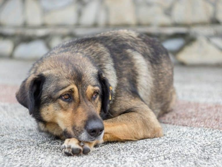 What to Do With a Stray Dog After Hours – Complete Guide