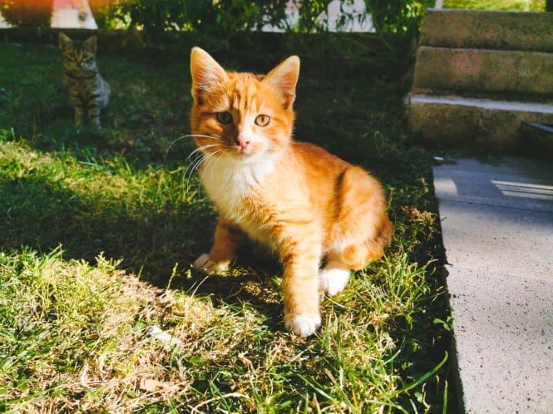 stray kitten on yard