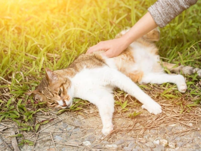 touching cat